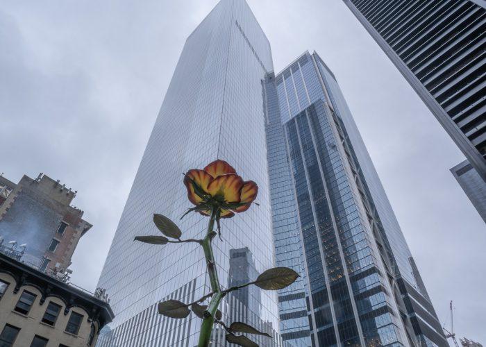 Rose à Manhattan